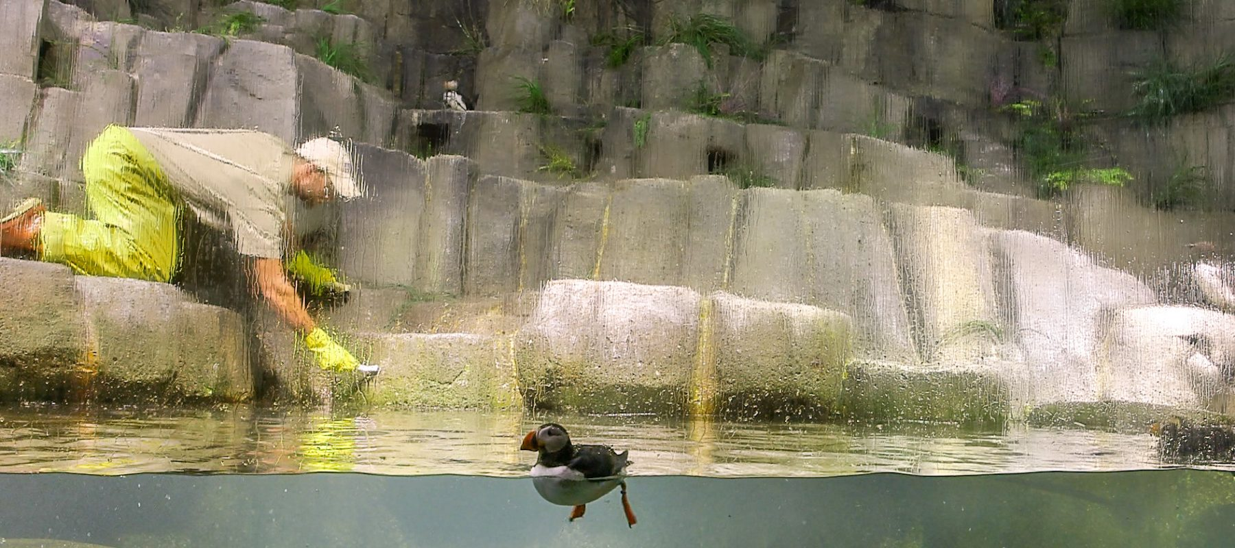 A building with a bird in the water